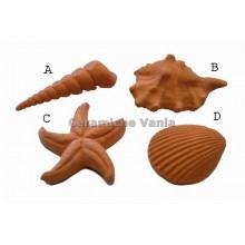 W045 - Comb shell / B